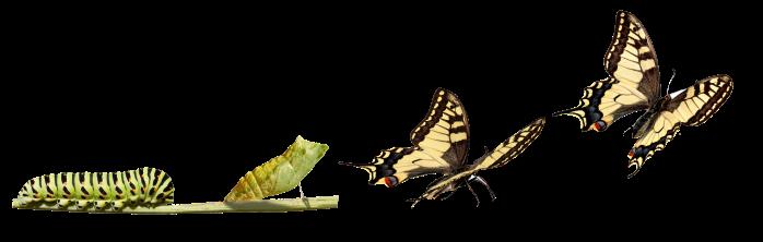 TransformationButterfly